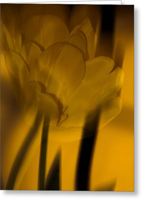 Greeting Card featuring the photograph Tulip Abstract by Ed Gleichman