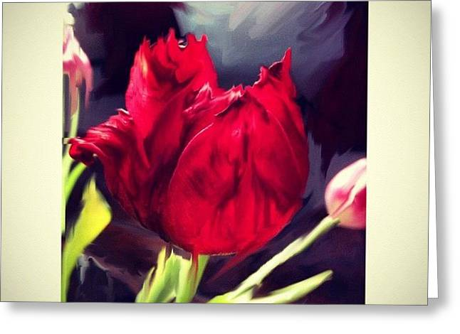 Tulip Aflame Greeting Card