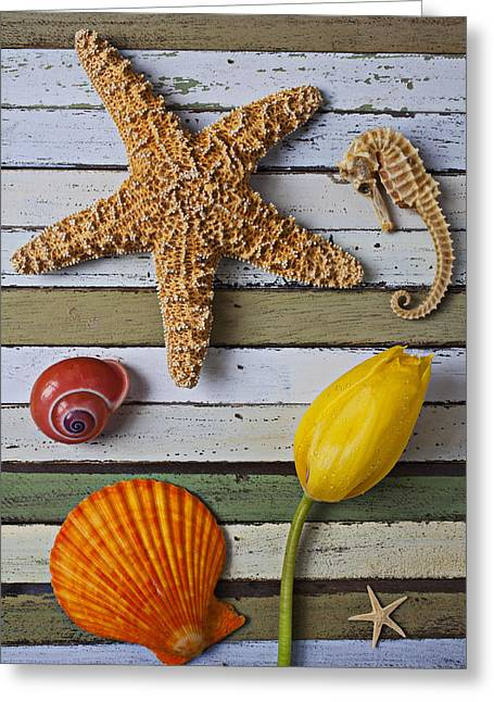 Tulip And Starfish Greeting Card by Garry Gay