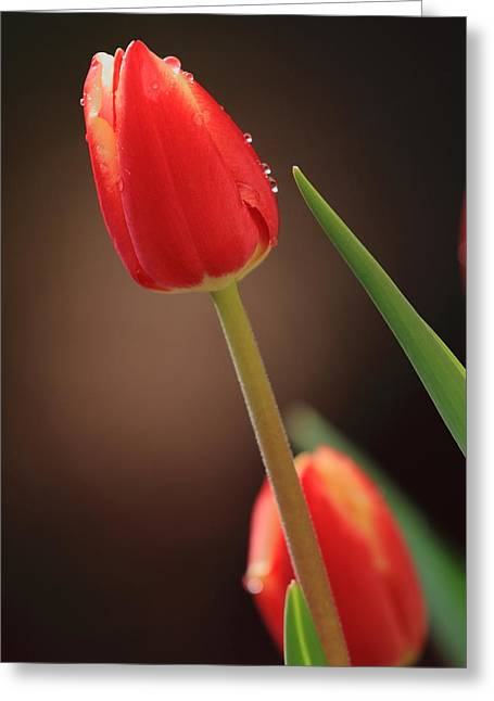Greeting Card featuring the photograph Tulip Dew by Coby Cooper