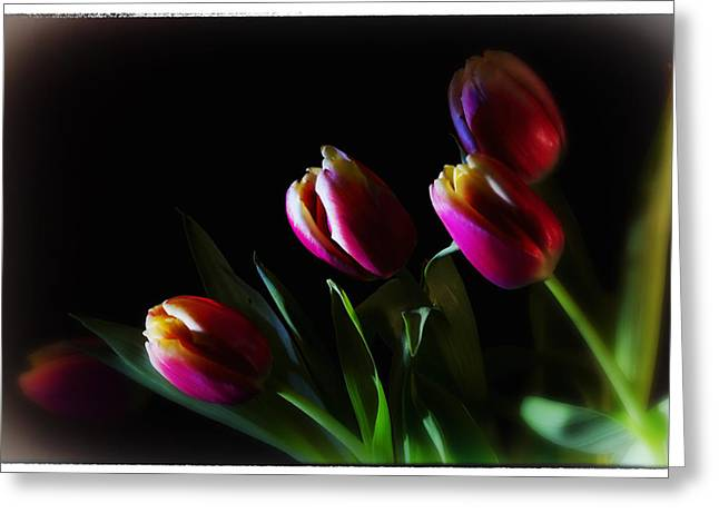 Tulip Dream Greeting Card