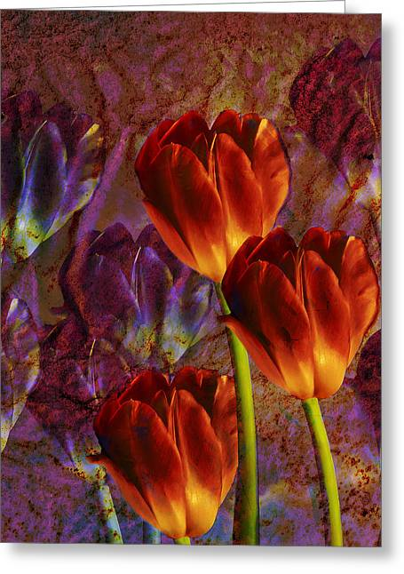 Greeting Card featuring the photograph Tulip Field by Katy Breen