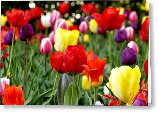 Tulip Garden University Of Pittsburgh  Greeting Card by Thomas R Fletcher
