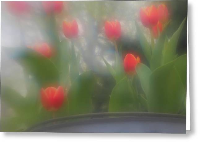 Greeting Card featuring the photograph Tulip Mist by Coby Cooper
