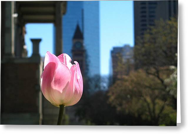 Tulip With Toronto Old City Hall Greeting Card by Alfred Ng