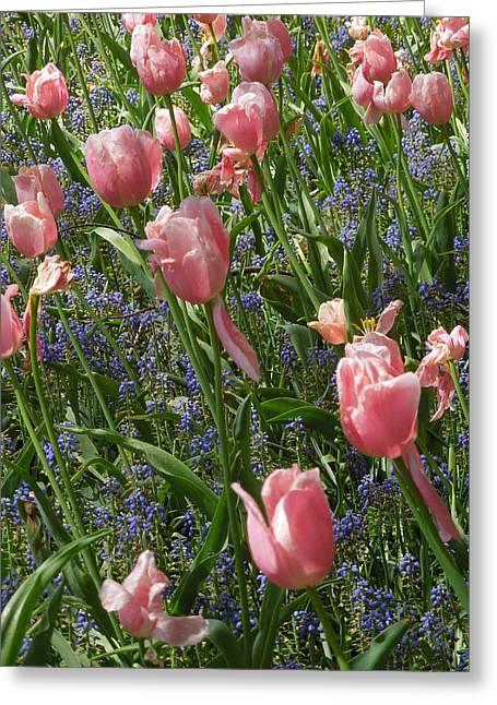 Tulips And Grape Hyacinth Greeting Card