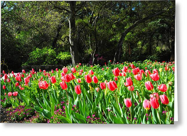 Tulips And Woods Greeting Card by Lynn Bauer