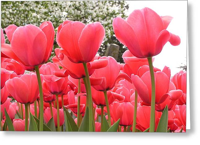 Tulips Greeting Card by Andrea Drake