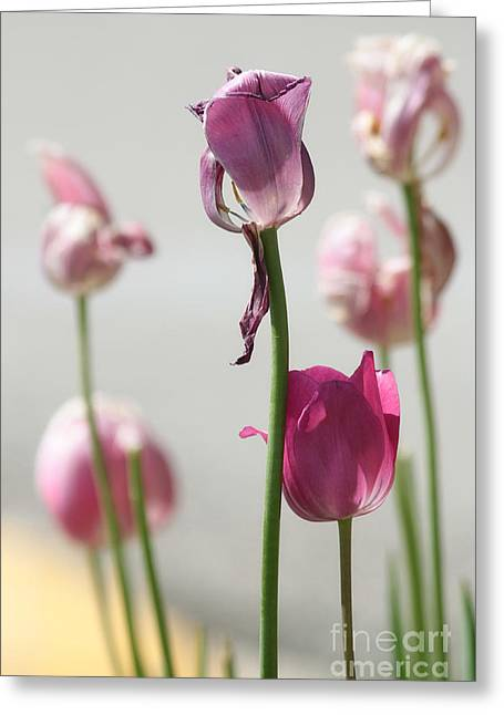 Tulips Greeting Card by Billie-Jo Miller