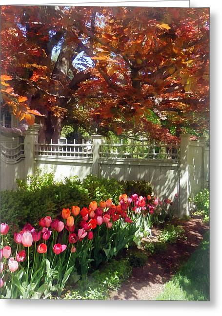 Tulips By Dappled Fence Greeting Card by Susan Savad