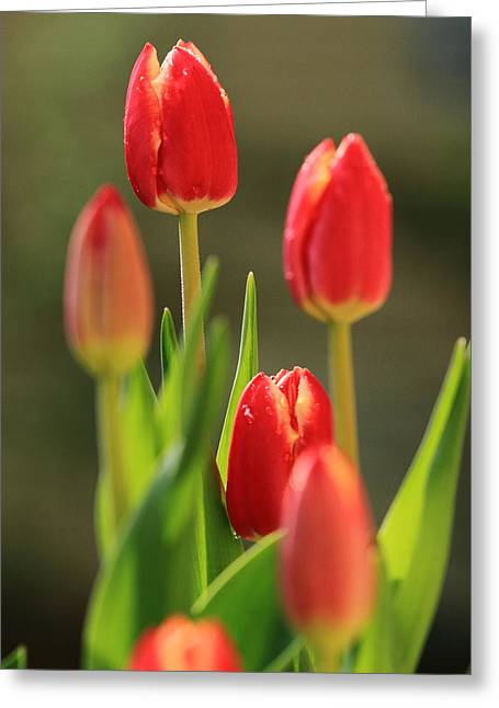 Greeting Card featuring the photograph Tulips by Coby Cooper