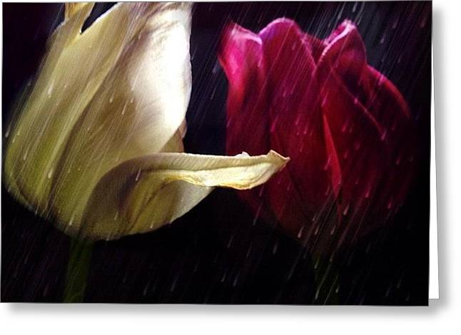 Tulips In The Rain Greeting Card by Paul Cutright