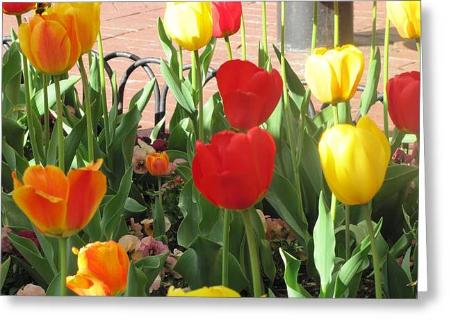 Greeting Card featuring the photograph Tulips In The Sunshine by Shawn Hughes