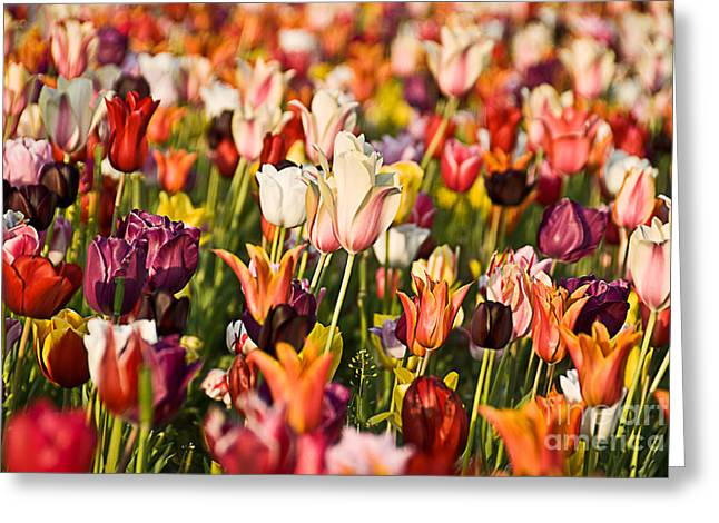 Greeting Card featuring the photograph Tulips by Okan YILMAZ