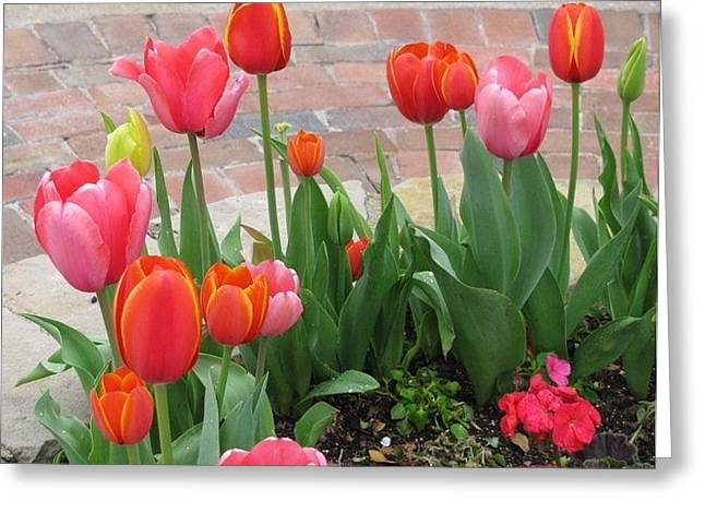 Greeting Card featuring the photograph Tulips by Shawn Hughes