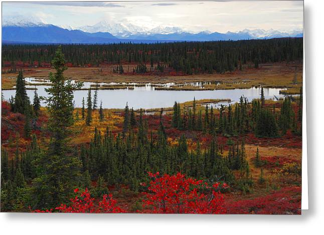 Tundra Landscape Greeting Card