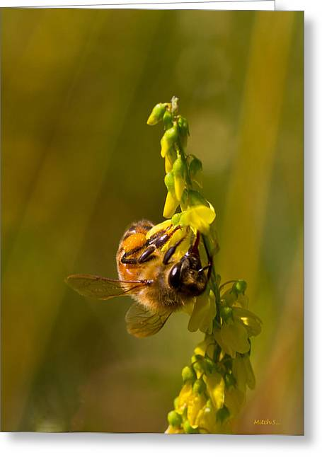 Tupelo Honey Greeting Card by Mitch Shindelbower
