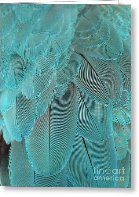 Turquoise Feathers Greeting Card by Sabrina L Ryan