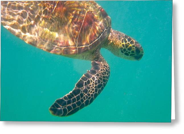Turtle 3 Greeting Card by Erika Swartzkopf