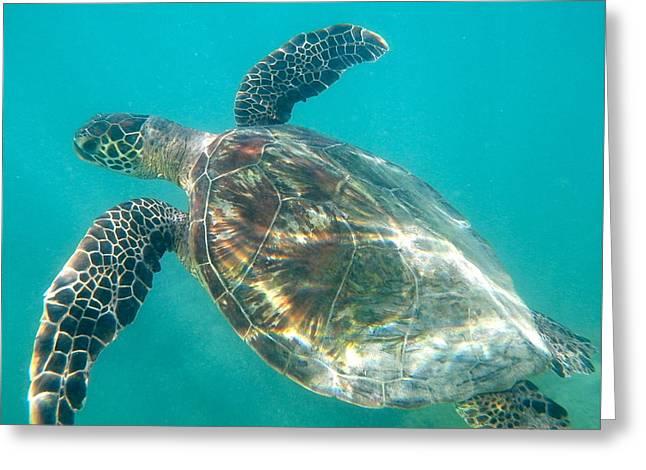 Turtle 7 Greeting Card by Erika Swartzkopf