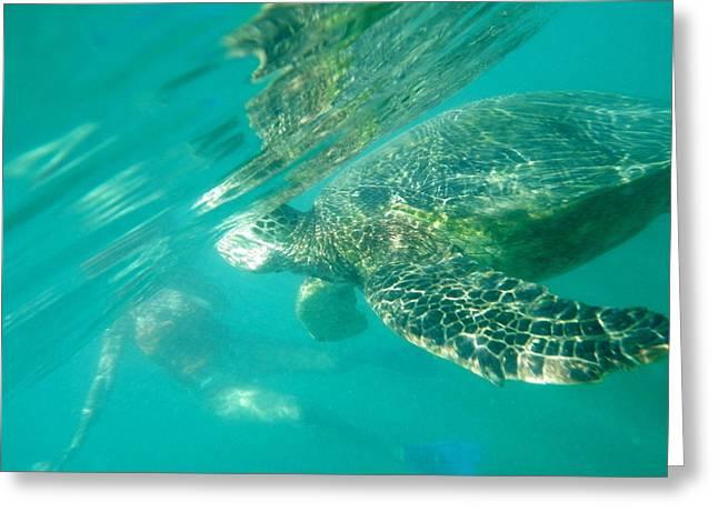 Turtle 8 Greeting Card by Erika Swartzkopf