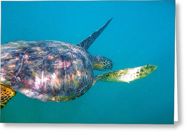Turtle 9 Greeting Card