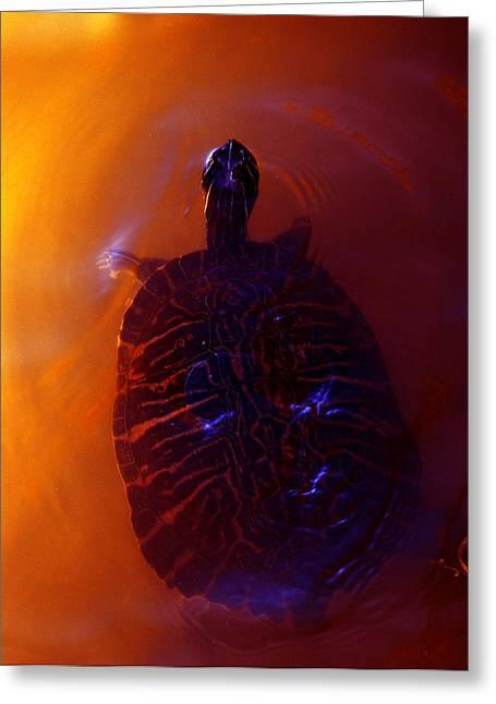 Turtle In Florida  Greeting Card