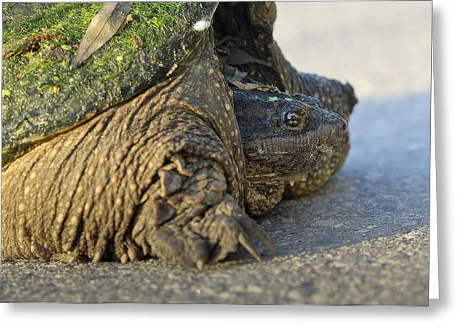 Greeting Card featuring the photograph Turtle by Nick Mares