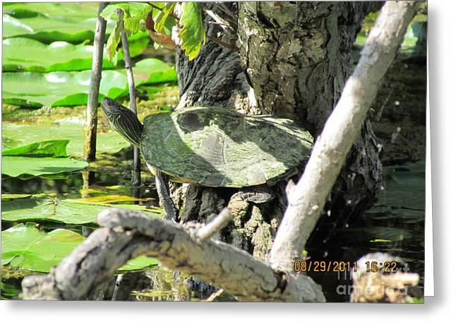 Turtle Sun Greeting Card by Thomas Sterett