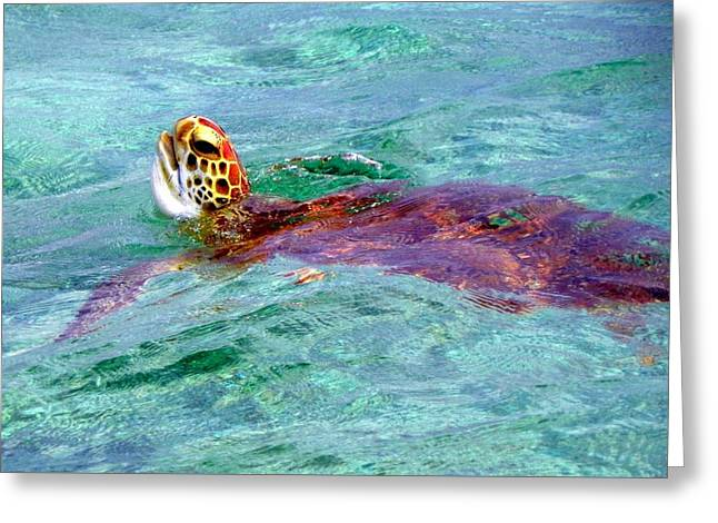 Turtle Time  Greeting Card by Karen Wiles