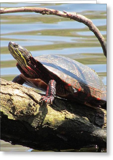 Turtle Greeting Card by Todd Sherlock