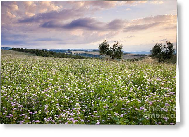 Tuscany Flowers Greeting Card