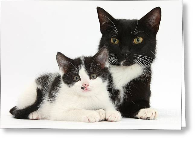 Tuxedo Mother Cat And Kitten Greeting Card