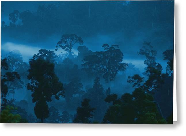 Twilight View Of Fog Rising Greeting Card by Mattias Klum