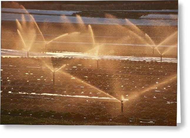 Twilight View Of Sprinklers Watering Greeting Card by Michael S. Lewis