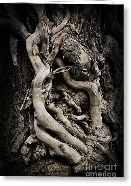 Twisted Dreams Greeting Card by Mary Machare