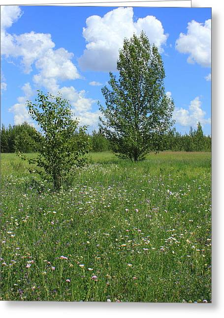 Two Aspens In A Meadow Greeting Card by Jim Sauchyn