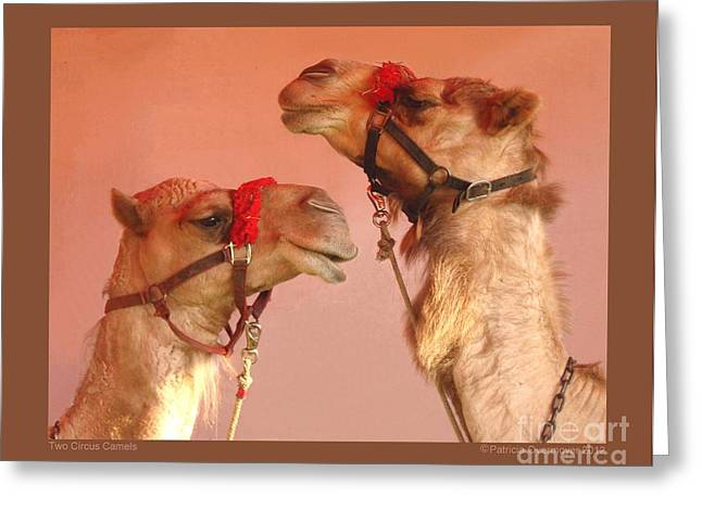 Two Circus Camels Greeting Card by Patricia Overmoyer