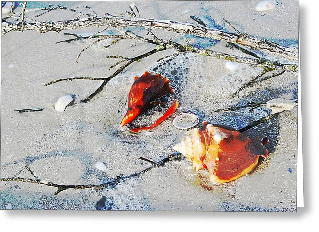 Two Conch Shells With Branch Greeting Card by Olivia Novak