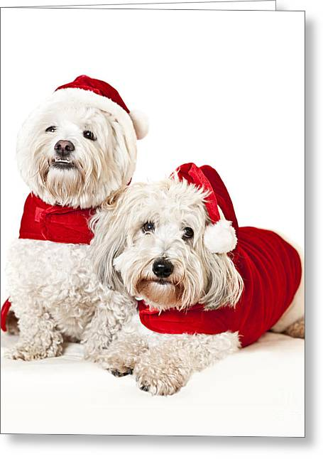 Two Cute Dogs In Santa Outfits Greeting Card by Elena Elisseeva