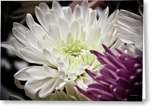 Two Flowers Greeting Card by John Pagliuca