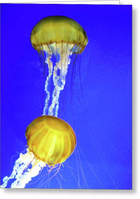 Two Gold Jellys Greeting Card