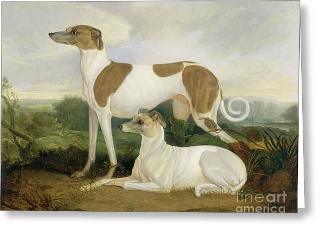 Two Greyhounds In A Landscape Greeting Card by Charles Hancock