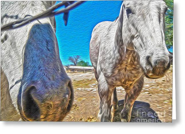 Two Horses Greeting Card by Gregory Dyer