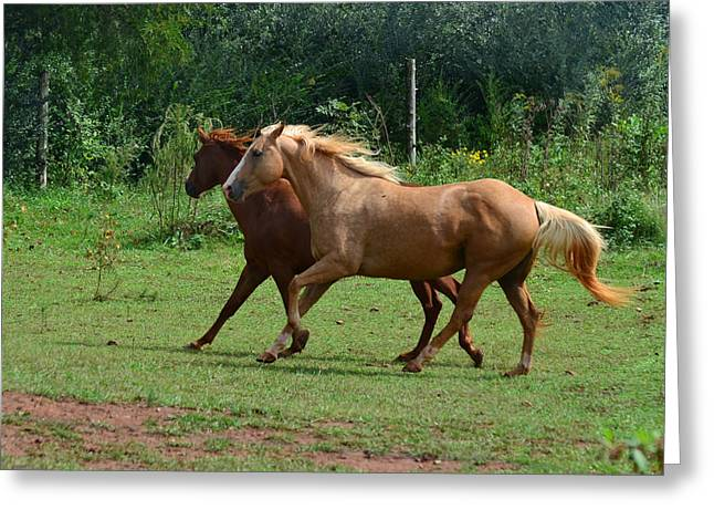 Two Horses In Unison  - 7221d Greeting Card by Paul Lyndon Phillips
