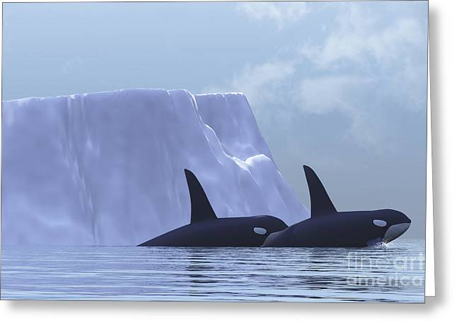 Two Killer Whales Swim Near An Iceberg Greeting Card by Corey Ford