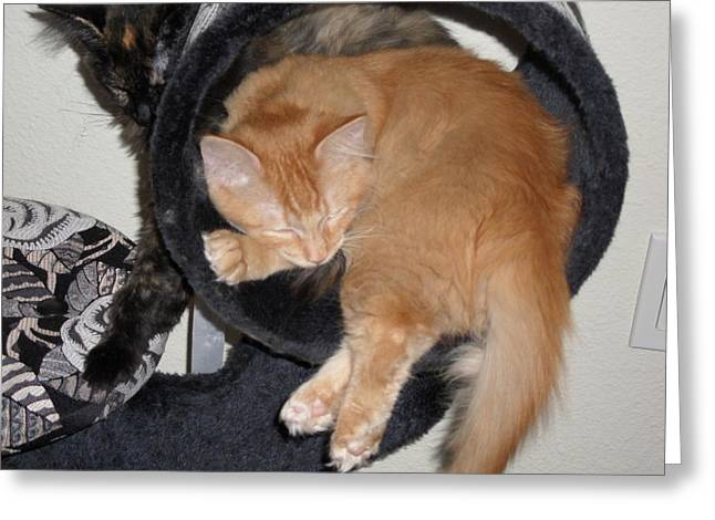 Two Kittens Greeting Card by Val Oconnor