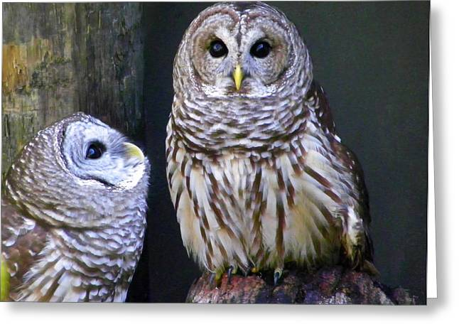 Two Little Owls Greeting Card
