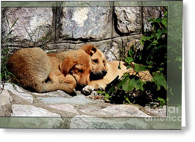 Two Little Puppies Greeting Card by Melania Sherdenkovska