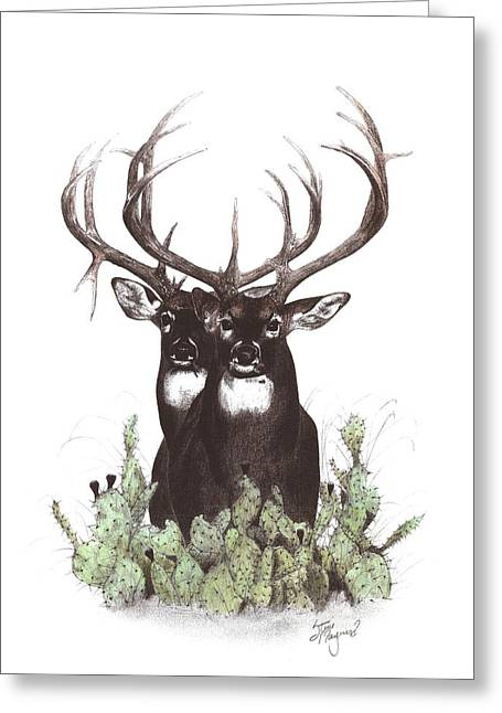 Two Of A Kind Greeting Card by Steve Maynard